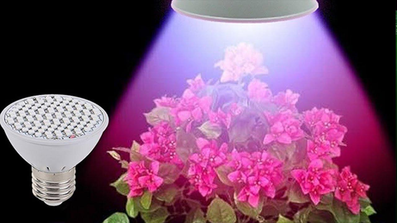 Искусственное освещение для комнатных растений. Ошибки цветоводов.