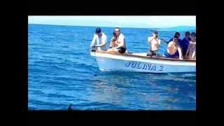 Les Baleines Randeau  Rand'eau Tortues et Cétacés