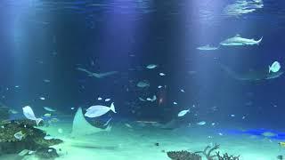 아쿠아리움  Aquarium