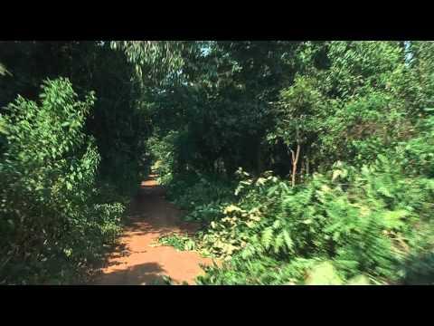 Jungle Road in Western Uganda. Road leads through thick Jungle in Uganda