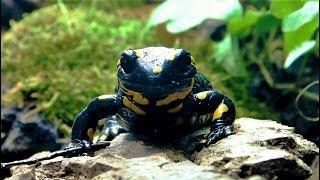 (Fire) Salamander Terrarium Setup || Terrarium für Feuersalamander & andere Amphibien
