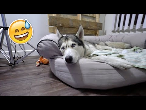 Spying on my Husky Alone at Night! - This is What He Does!