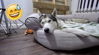 I use night vision to spy on my husky Gohan and see what he does at...