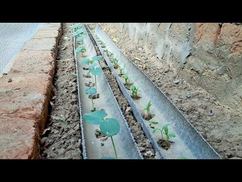 Pvc Pipe Save Water Idea Beautiful Home Gardening and Kitchen Gardening