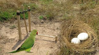 How to Make Easy Bird Nest Trap Using wood & Creative DIY Bird  & Catch A lot of Eggs Parrot in wild