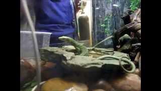 Кормление рыб и пресмыкающихся