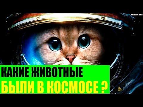 Вопрос: Какие животные летали в космос и имели потомство на космическом корабле?