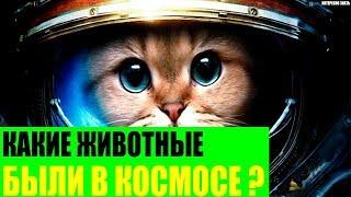 Какие животные были в космосе?