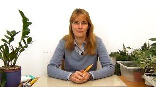 видео Пересадка растений