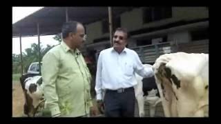 Cattle management in dairy Kannada BAIF Karnataka