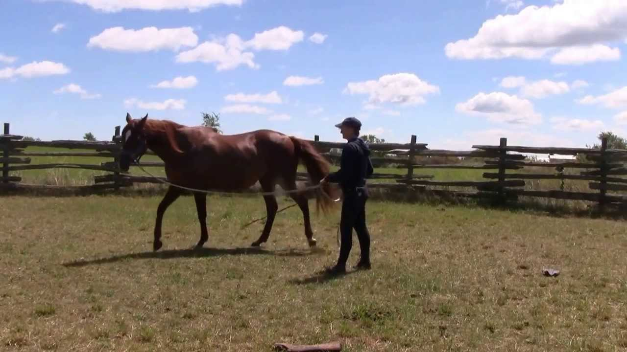 In your opinion, what horse training practices or ... |Horse Training