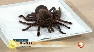 """Owe Sandström: """"Alla spindlar har gift"""" - Nyhetsmorgon (TV4)"""