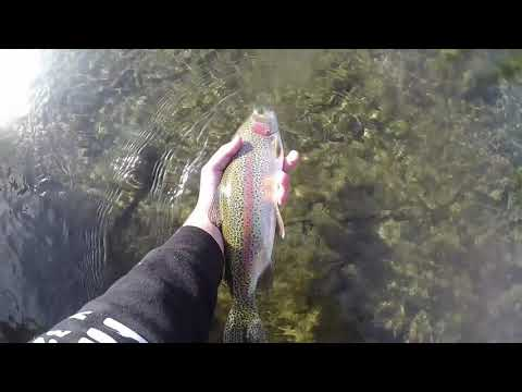 Fly Fishing For Big Rainbow Trout! Truckee River