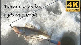 Тактика поиска судака зимой на большом озере без рельефа Рыбалка 13 03 2021
