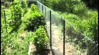 Забор из сетки рабицы(Как сделать на даче забор из сетки рабицы, мой личный опыт. Делаем ограждение из сетки рабицы на приусадебно..., 2015-09-14T08:29:27.000Z)