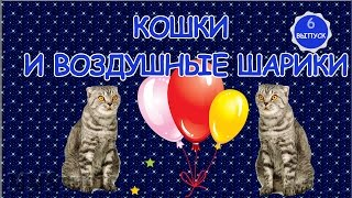 ***Игра кошек  с воздушными шариками***