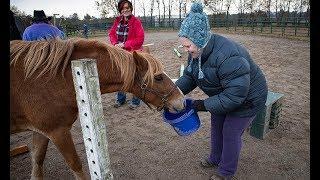 Legion members help veterans heal using the power of the horse