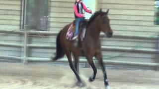 Petit cavalier, grand cheval