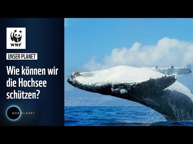 Wie können wir die Hochsee schützen? | WWF Unser Planet