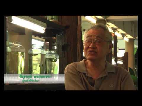 รายการเที่ยววิถีไทย พิพิธภัณฑ์ปลากัดไทย 1-1 ออกอากาศ 22 ธ.ค. 56
