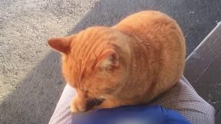 人懐っこいかわいい猫ちゃん(*^^*)その2(Friendly cute cat)NO2