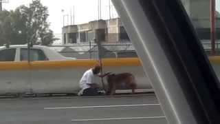 woman rescues dog on highway