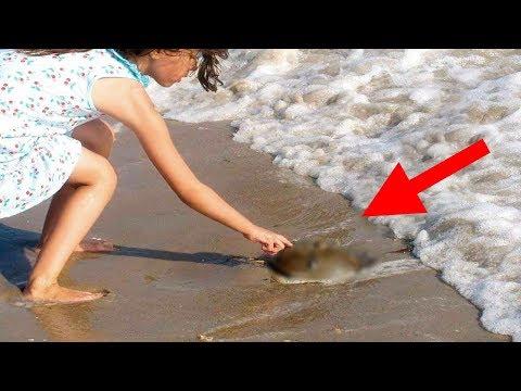 Wenn Du Das Am Strand Findest, BERÜHRE ES AUF KEINEN FALL!