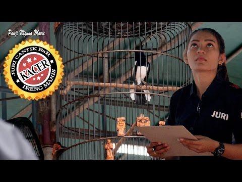 SUARA BURUNG : Aksi Kacer Ireng Manis Di Depan Juri Cantik Soeharto Cup 3 Jogja