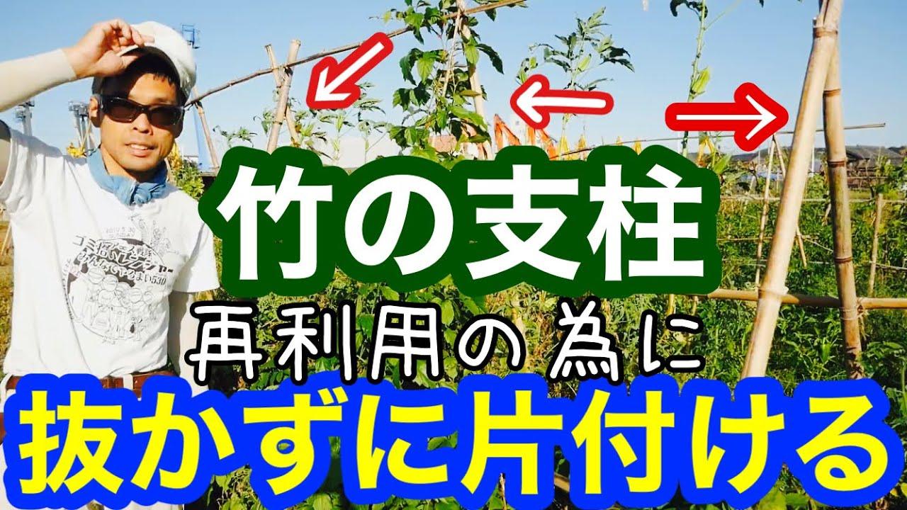 夏野菜の支柱を抜かずに片付けて再利用する為のやり方【自然農】2020年10月15日