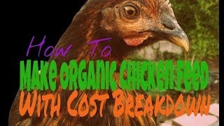 How To Make Organic Chicken Feed With Cost Breakdown