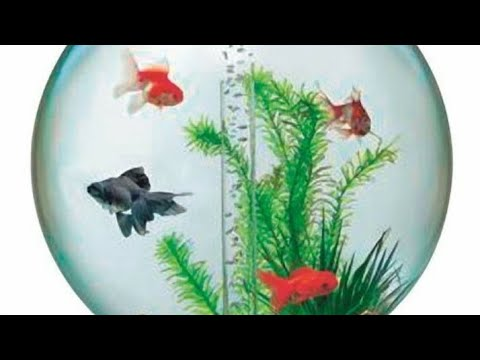 FISH TANK FOR MONEY LUCK