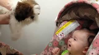 дети смеются над собаками подборка
