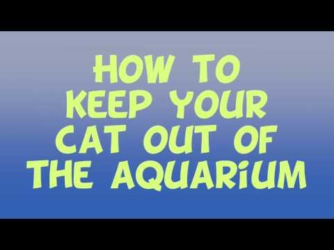 Stop The Cat From Jumping In The Aquarium : Mark Tatum