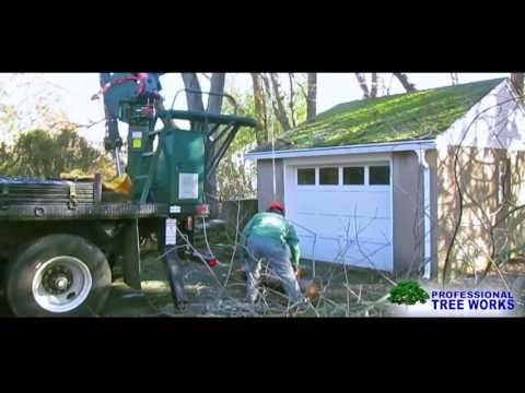 removing-a-fallen-dead-austrian-pine-tree-on-a-garage