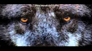 Волк отомстил,но отомстил без крови...(Видео составлено под голос диктора,не моя история)(За доброту волков!, 2016-01-06T07:40:21.000Z)