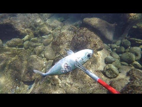 Spear N' Cook Goatfish | Spearfishing Hawaii