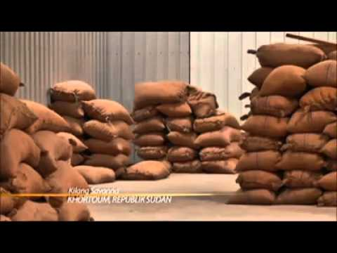 100% Asli © Khasiat Arabic Gum | Gam Arab | Al Manna (PROMO Serendah RM15)