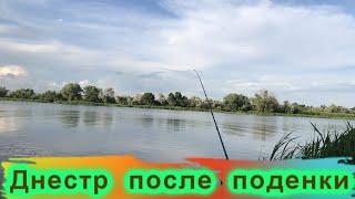 Рыбалка после вылета поденки как клевала рыба Маяки Днестр