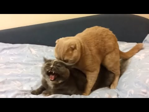 Cute Cats And Kittens Strange Meowing