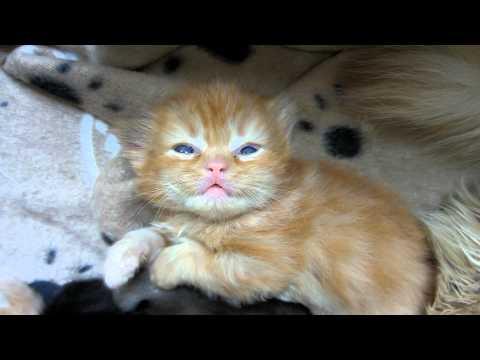 The Kitten Horror Movie - Don't watch alone
