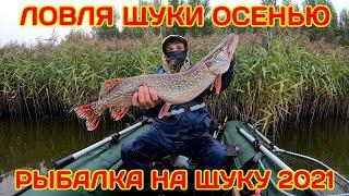 Ловля щуки осенью. Рыбалка на щуку 2021