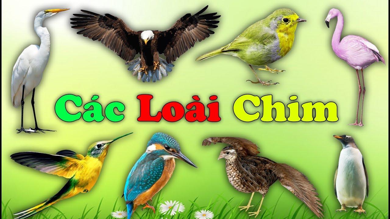 image Con gì đây | Bé học các loài chim | Learn about birds