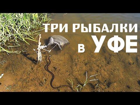 Активная Чехонь на Белой | Рыбалка на Деме | Пруд в Волково (2019)
