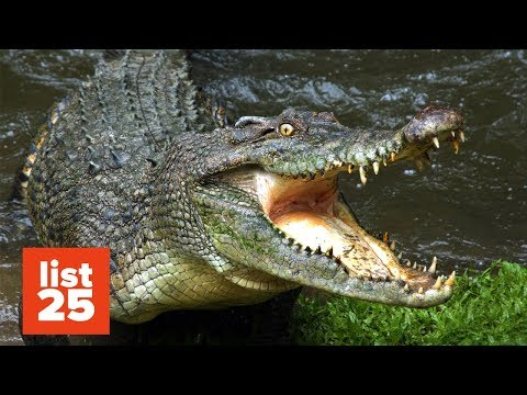 25 SCARIEST Animals You Should Run Away From