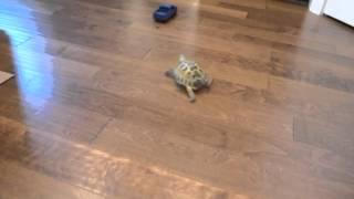 Черепаха против грузовика / Tortoise vs. Truck @darcyxa