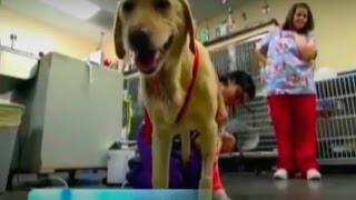 Ветеринары - фильм о профессии