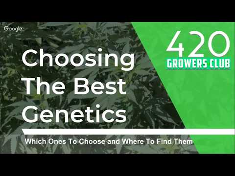 Choosing The Best Cannabis Genetics: Which Ones to Choose and Where to Find Them
