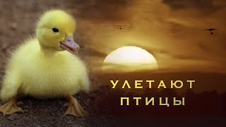 Улетают птицы - детская песня - клип - Наталия Лансере / children's song - birds fly away