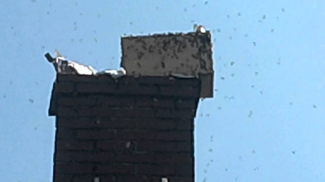 How to remove a chimney - Removing Honey Bee Hive Nest From Chimney