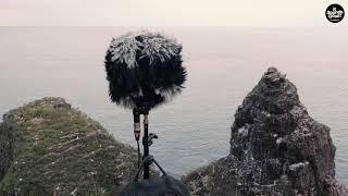 Bird's sounds in Cap-Frehel, Bretagne - France (MS setup)